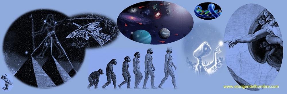 Teoria de Darwin Evolucion Del Hombre la Evolución Del Hombre