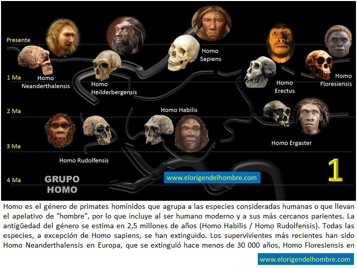 Mas Allá De Darwin La Evolución Humana