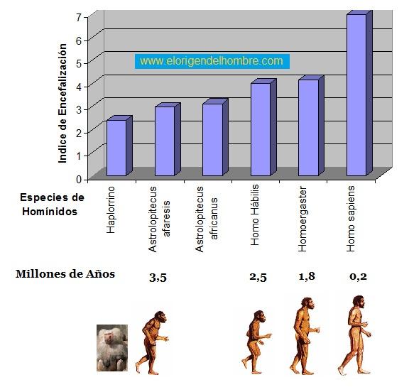 indice de encefalizacion hominidos